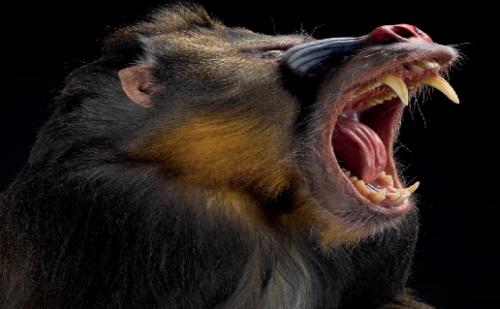 Micos, una historia de primates