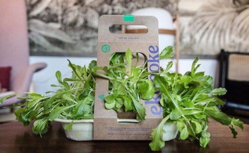 Nuevo Zoom de Newdreamers con Ekonoke: mini-huertos de lechugas y otras hortalizas